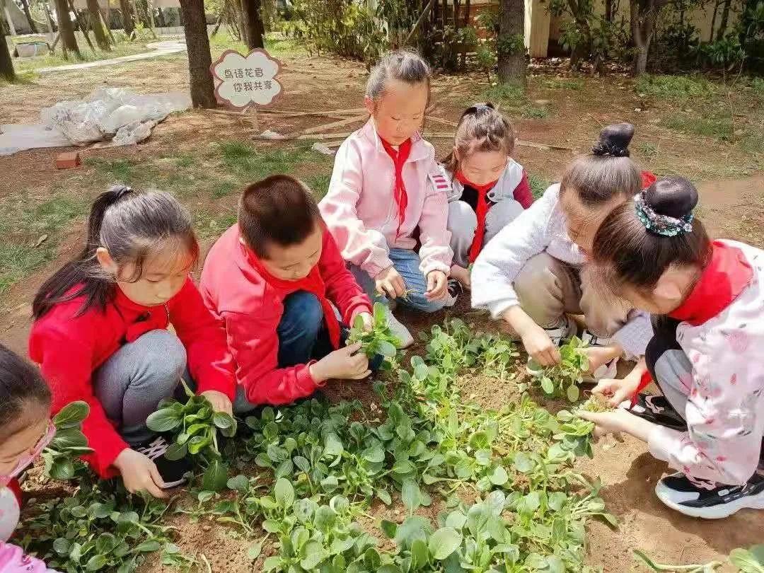 八大峡小学:海式少年劳动忙,体验辛苦悦成长